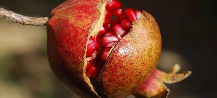 Complementos Antioxidantes