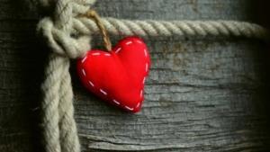 Salud Sistema Cardiovascular Circulación Sanguinea
